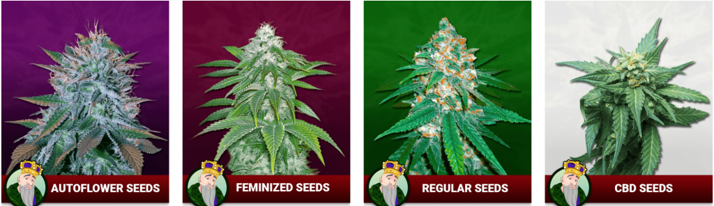 Crop King Strain Selection