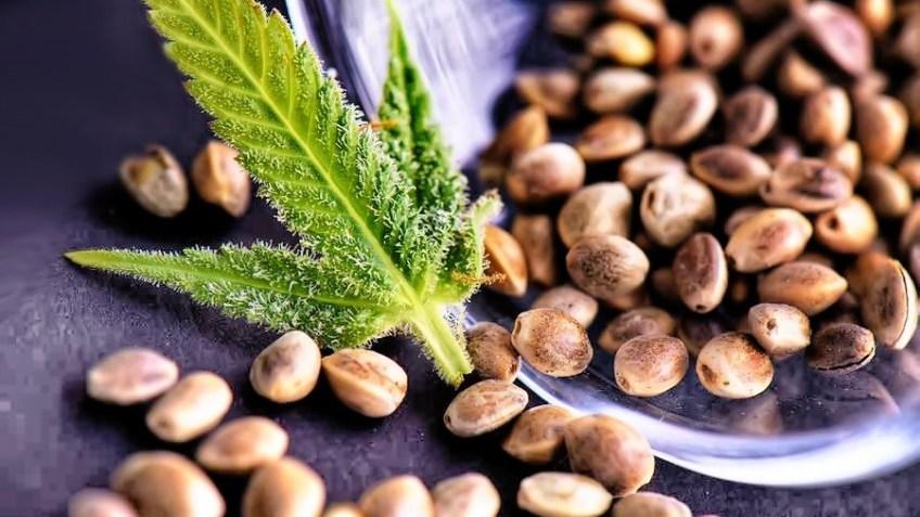 seedsman seed bank