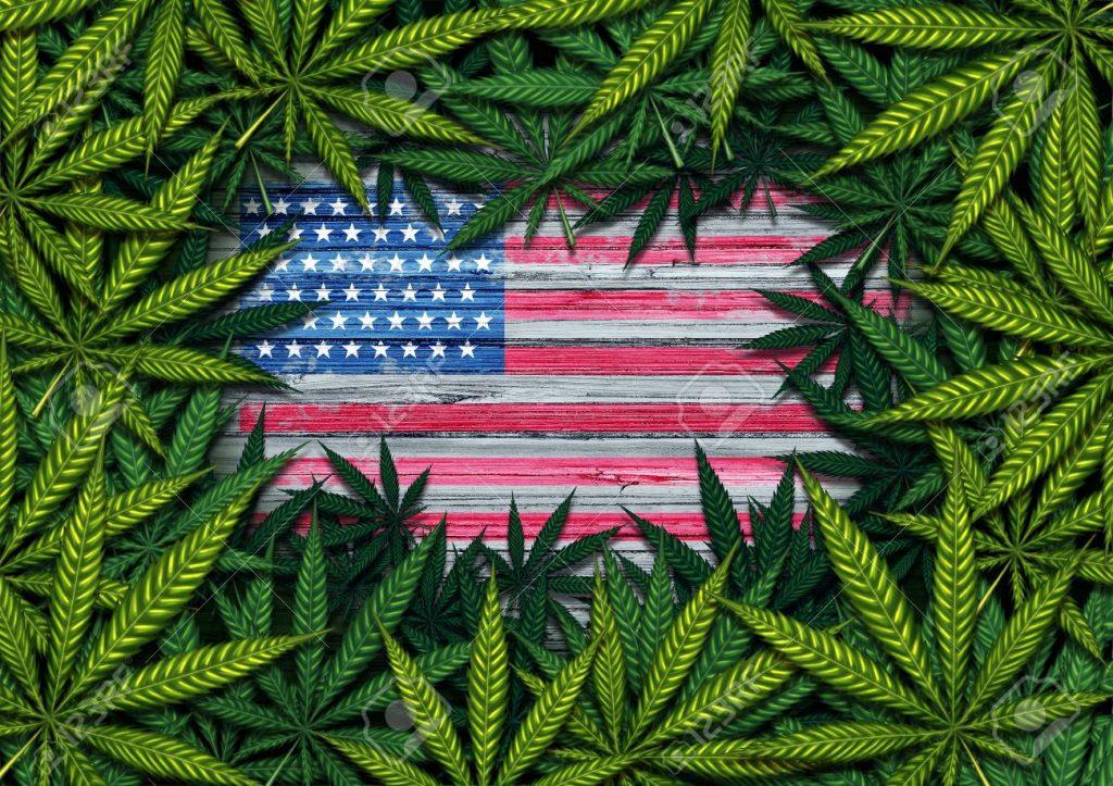 buying cannabis seeds usa
