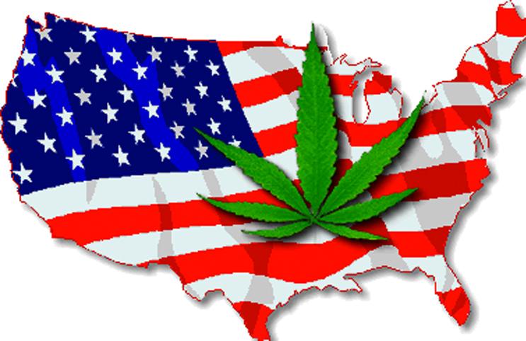 cannabis seeds usa