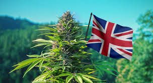 buy cannabis seeds uk