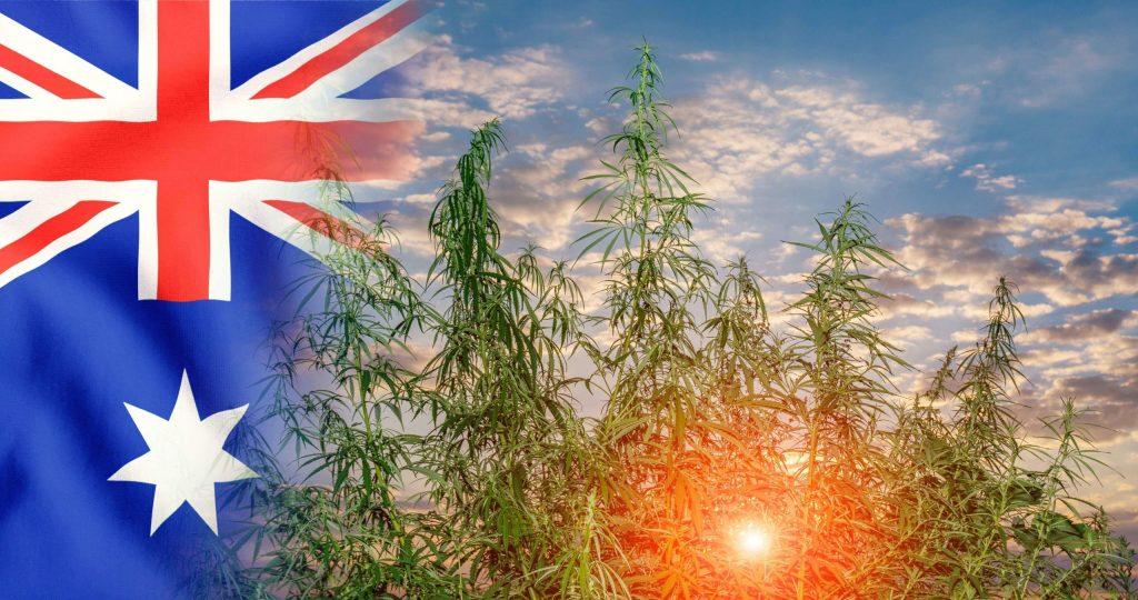 buying marijuana seeds in Australia