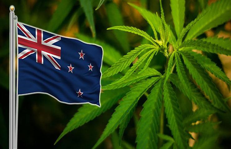 marijuana seeds NZ
