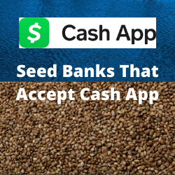 Seed Banks That Accept Cash App