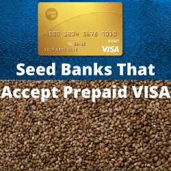 Seed Banks That Accept Prepaid VISA